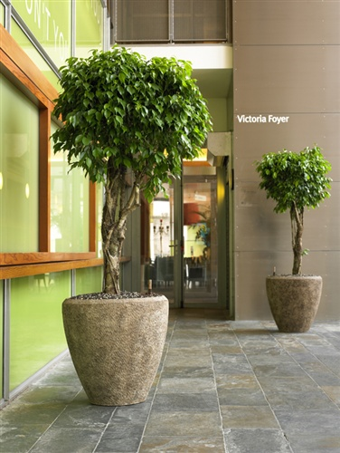 Location de plante d 39 int rieur ou d 39 ext rieur plantes for Fushia plante interieur ou exterieur