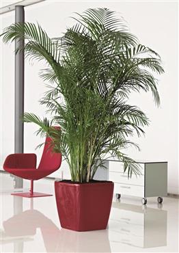 deco plante location vente et entretien de plantes et fleurs naturelles ou artificielles l. Black Bedroom Furniture Sets. Home Design Ideas